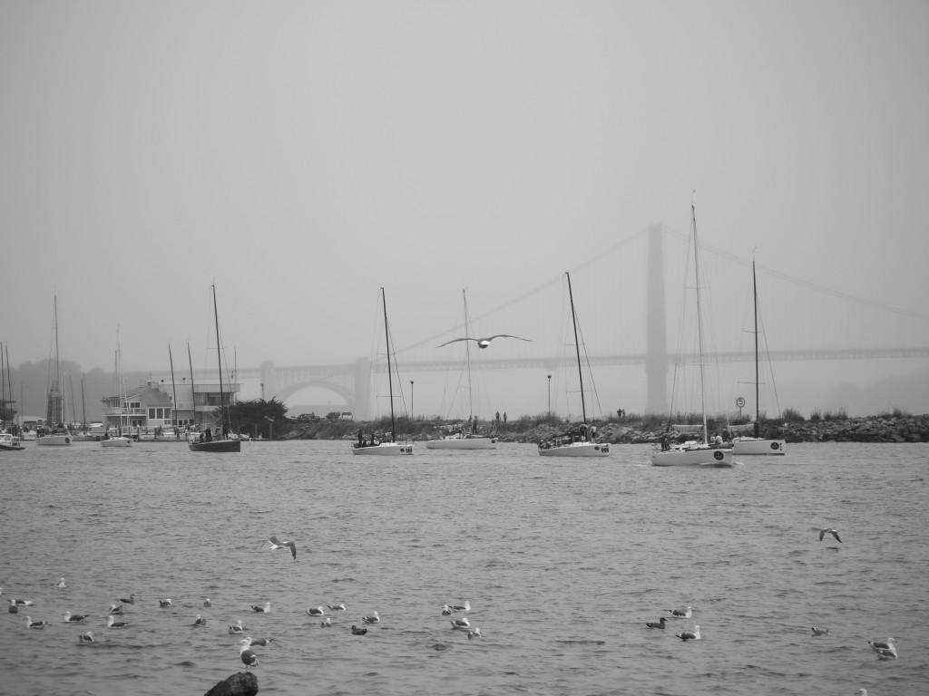 Regatta leaving the marina.