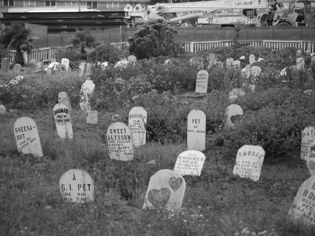 Grave markers in the Presidio Pet Cemetery
