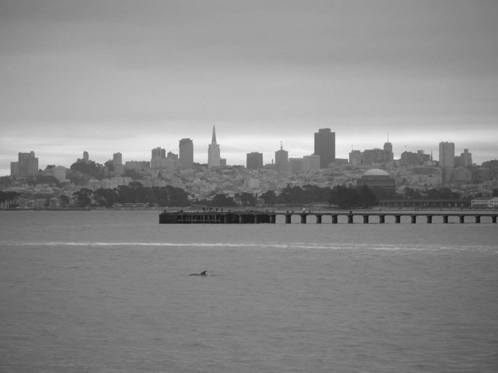 Dolphin in the San Francisco bay, off Fort Point