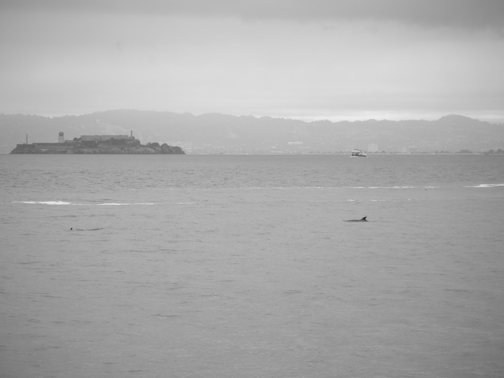 Dolphins and Alcatraz