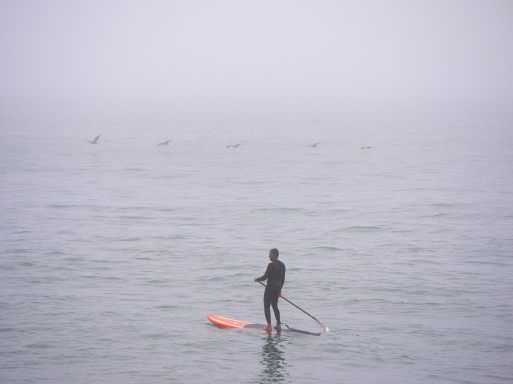 Paddle boarder and pelicans.